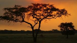 india sunset