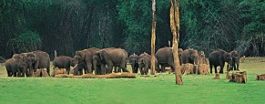 Kerala – The Land of Diversity, Exotic Ambience And Nature's Paradise!