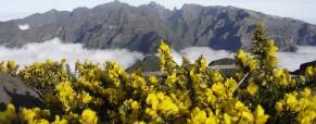 A ride through Funchal Madeira