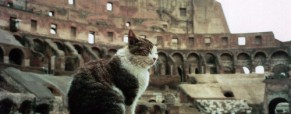 "Say ""meow"" to the cats of Rome!"